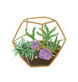 hand drawn plant terrarium with succulents in vector image vector image