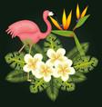 tropical birds design vector image vector image