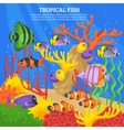 Tropical Fish Sea Background vector image