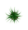 top view green plants easy copy paste in your vector image vector image