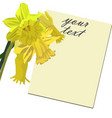 floral card with narcissus vector image vector image