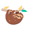 mother sloth hanging on a branch with a child vector image vector image