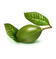 photo realistic ambarella 3d fruit isolated vector image vector image