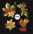 bouquets autumn yellow leaves and berries vector image vector image