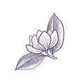 drawing branch magnoila tree vector image