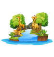 giraffe on the isolated nature vector image