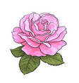 pink rose flower with green leaves realistic hand vector image vector image