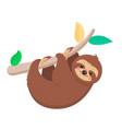 joyful sloth hanging on a branch vector image vector image