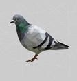 low poly pigeon bird on gray back groundanimal vector image vector image
