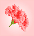 Pink hibiscus tropical flowers blossom simple vector image vector image