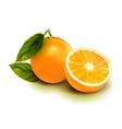 realistic orange fruit isolate orange with vector image vector image