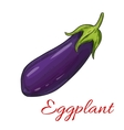 Sketched eggplant or aubergine vegetable vector image vector image