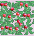 dogrose seamless pattern vector image vector image