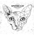 Hipster animal realistic and polygonal sphynx cat