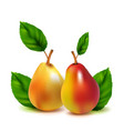 realistic pears isolated on white vector image