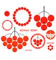 Rowan Berry vector image vector image