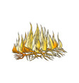 traditional burning camping fire color vector image vector image