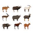 african wildlife characters set eastern bongo vector image vector image