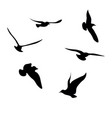 black seagulls silhouettes collection vector image vector image