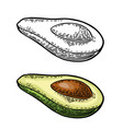 Half avocado with seed vintage engraved