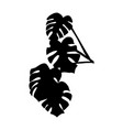 monstera leaves black silhouette vector image