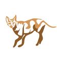 ceylon cat vector image vector image