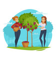 winery grape harvesting cartoon composition vector image