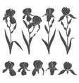 set with iris flowers vector image vector image