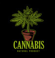 cannabis natural product vector image