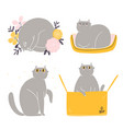 cute british shorthair cat collection 4 vector image