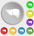 Liver icon sign Symbol on eight flat buttons vector image