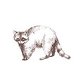raccoon hand drawn with contour lines on white vector image
