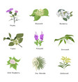 set of drawing wild flowers vector image vector image