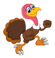 Cute turkey running vector image