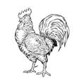a cock vector image