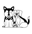 beagle and siberian dogs pet vector image vector image