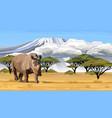 big african rhino walking in savanna in africa vector image vector image