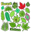 Nature Plants and Leaves Scrapbook Stickers vector image vector image