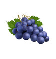 realistic grape bunch black winery grapes vector image vector image