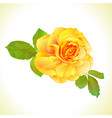 rose yellow and leaves nature background vector image vector image