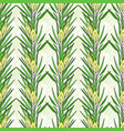 seamless pattern with rooibos plant herbal tea vector image
