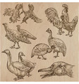 farm animals birds - an hand drawn pack collection vector image vector image