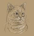 brown cat portrait 7 vector image vector image