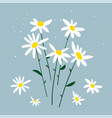chamomile bouquet of vector image vector image
