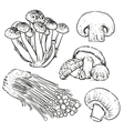 Drawing mushrooms on white background vector image vector image
