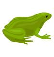 green frog icon cartoon style vector image vector image