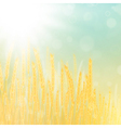 wheat field vector image vector image