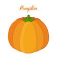 orange pumpkin halloween symbol vector image vector image