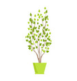 plant of green color in pot vector image vector image