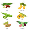 beans species set healthy and nutritious natural vector image vector image